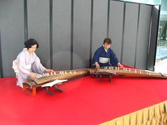 plucked string instruments, string instrument, folk instrument, koto, guzheng, gayageum, string instrument,