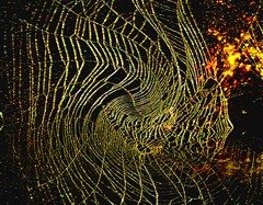 Spider and Spider Web Project 527