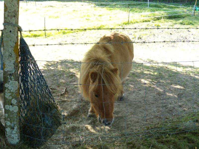 My little pony Crowhurst to Battle