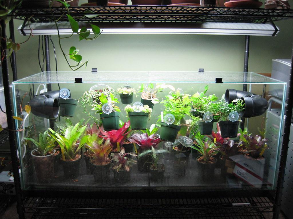 Plant Viv Shock Dendroboard