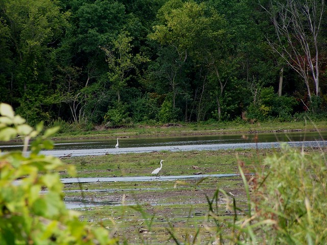 wetland restoration projects