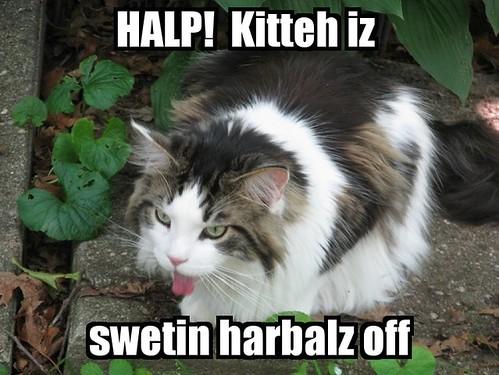 Halp!!
