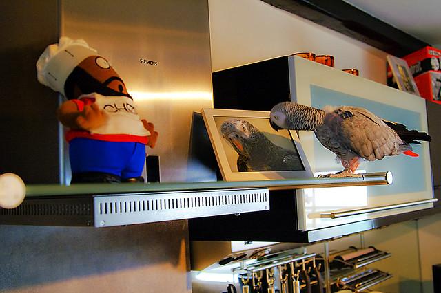 Henry S Kitchen Dunedin