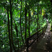 El Yunque Tropical Forest