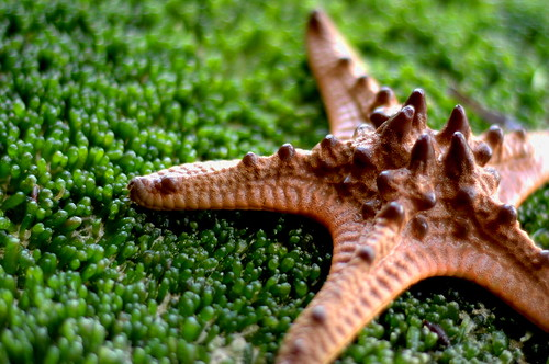 Starfish Troopers 2