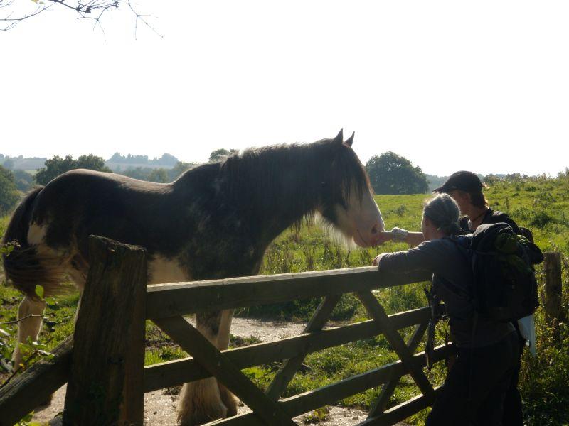 """Horse saying """"Hi"""" Wadhurst circular"""