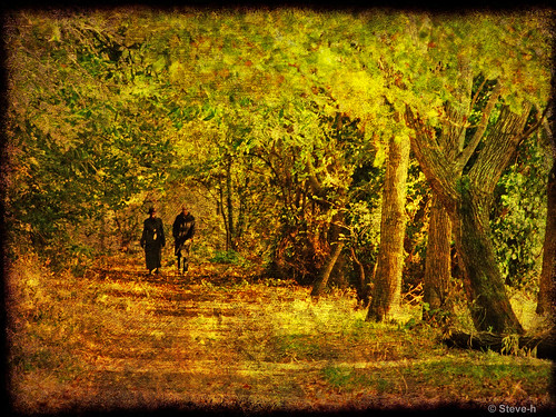 autumn trees ireland dublin brown sun black green texture leaves yellow gold shade finepix fujifilm fabulous bushes bushypark ghostbones woodlandwalk steveh outstandingshots golddragon mywinners anawesomeshot superaplus aplusphoto theunforgettablepictures brillianteyejewel colourartaward platinumheartaward artlegacy theperfectphotographer flickrestrellas spiritofphotography s100fs rubyphotographer qualitypixels llovemypics favemoifrance obq grouptripod besidetheriverdodder phvalue flickrsmasterpieces