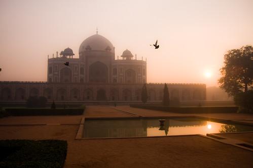 india bird sunrise reflections dawn delhi tomb mausoleum humayunstomb humayun