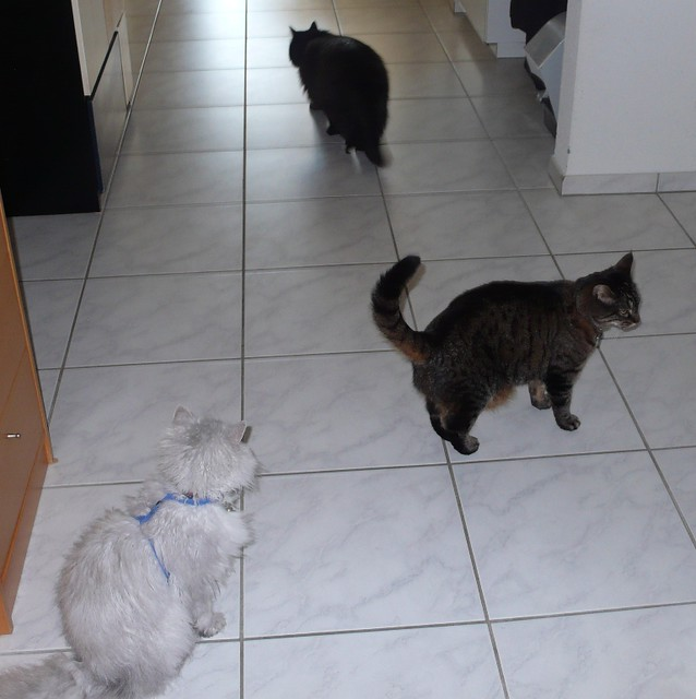 The cat trio, Fluffy, Tabby and Nera