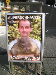 animal(1.0), wombat(1.0), mammal(1.0), fauna(1.0),