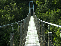 truss bridge(0.0), rolling stock(0.0), track(0.0), arch bridge(0.0), skyway(0.0), suspension bridge(1.0), canopy walkway(1.0), rope bridge(1.0), bridge(1.0),