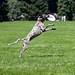 Skyhoundz Disc Dog Competition by richarddigitalphotos