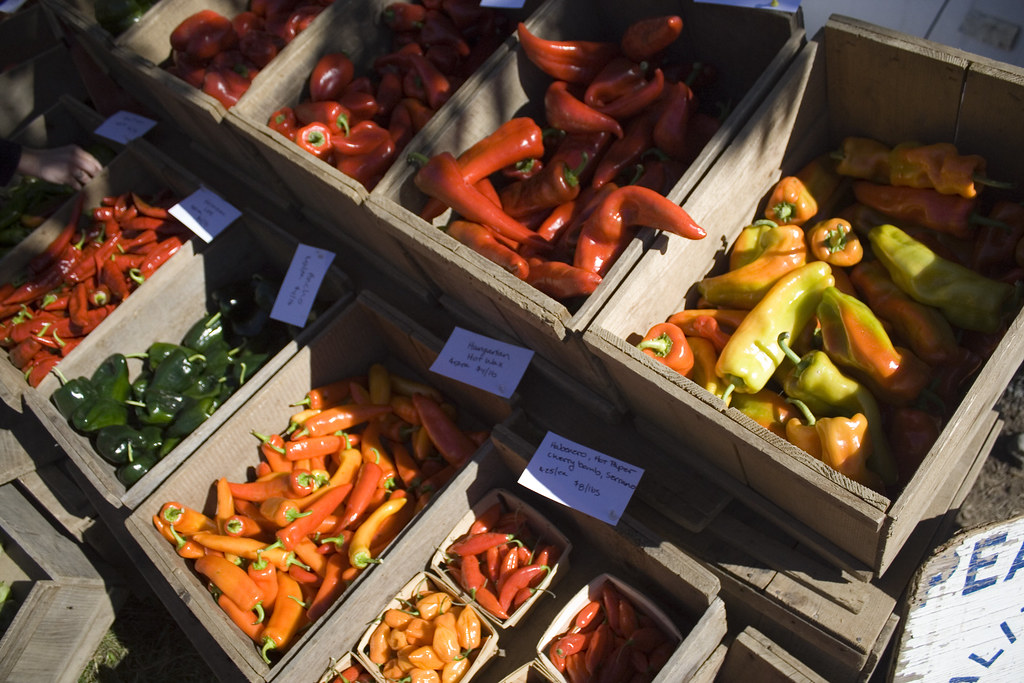Colorful peppers. Common Ground Fair - by Matt Pettengill, on flickr