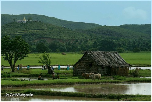 travel people mountain plant tree green home water farmhouse canon children landscape pagoda cow asia play mud paddy hut myanmar ricefield plough earthasia