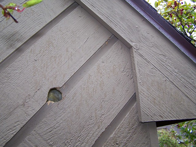Woodpecker Hole Through Siding Flickr Photo Sharing