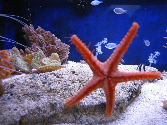 noum 233 a aquarium 201 toile de mer flickr photo
