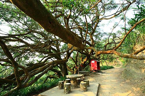 68i8莺歌步道-千年大榕树 | flickr – 相片分享!
