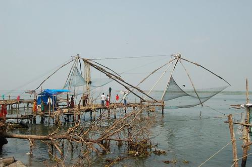 Die Fische werden aus dem Wasser gehoben mit einem Netz, dass durch ein Gerüst ins Wasser gelassen wird.