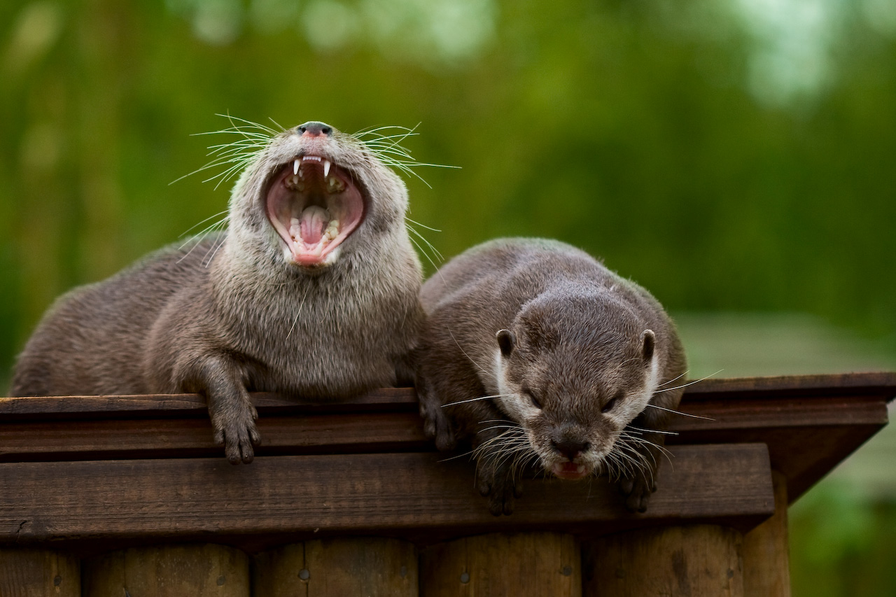 Animals Laughing Out Loud - photo#30