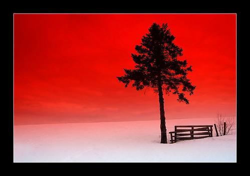 snow canada tree landscape nikon québec neige redsky paysage arbre charlevoix cokinfilter clôture themoulinrouge supershot cielrouge mywinners abigfave aplusphoto flickrplatinum megashot nikond40x excellentphotographerawards photofaceoffwinner theperfectphotographer