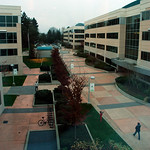 View of Microsoft Cedar Court, buildings 113, 112, Redmond, Washington, USA
