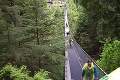 rolling stock(0.0), trail(1.0), rainforest(1.0), suspension bridge(1.0), canopy walkway(1.0), forest(1.0), rope bridge(1.0), bridge(1.0),