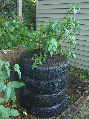 Plant your garden in a tire tirezoo for How to use old tires in a garden
