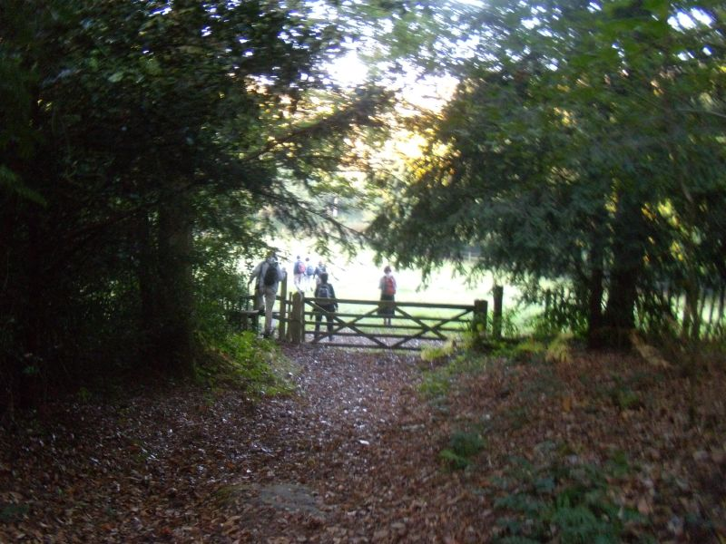 Through a gate Cowden to Eridge