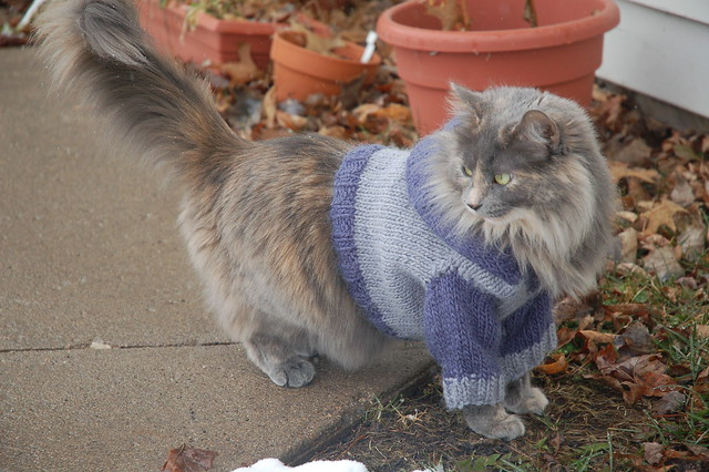 Knitting Pattern Cat Clothes : Cat Hoodie - Making Me Purrrrrr.... Flickr - Photo Sharing!