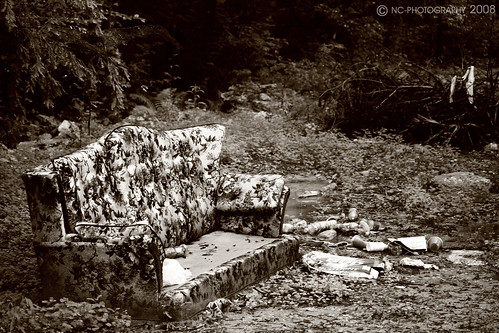 trees flower tree broken beer leaves trash forest out leaf woods litter couch ugly worn 70s cans outdated dated ratty raddy couchinthelandscape