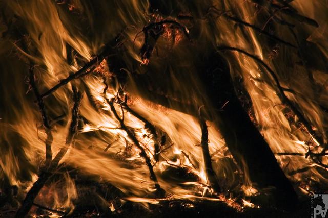 Fuego (2)