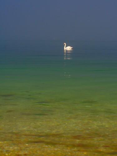 blue sea fog island swan long sound hase