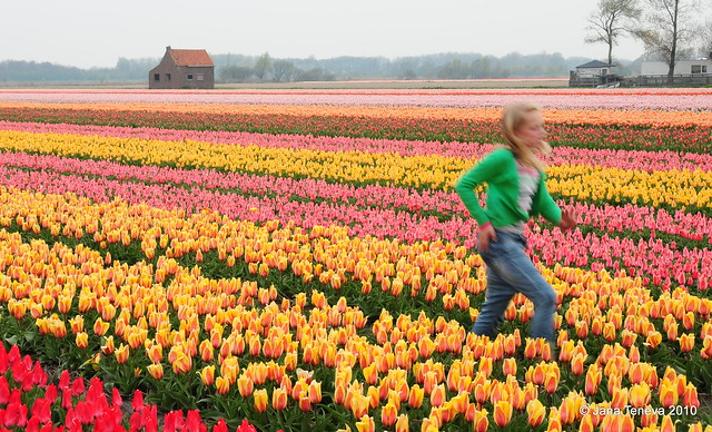 Its ...tuliptime in ...flowerland...