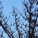 bats in trees by matt and kim