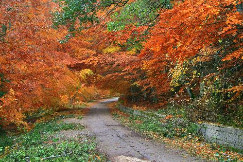 autumn red parco tree colors alberi way strada italia campania autunno rosso colori hdr marrone cilento blueribbonwinner efs1785 flickrsbest golddragon abigfave canon400d piaggine