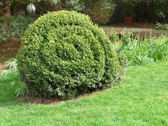 shrub, garden, grass, tree, green, hedge, lawn,