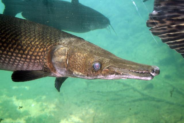 2008 07 25 athens tx freshwater fish hatchery 2981 for Texas fish hatchery