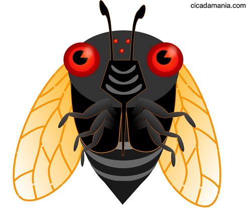 Cute cicada illustration