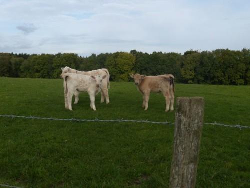 Levitating calves