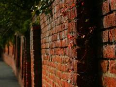 wild strawberry wall