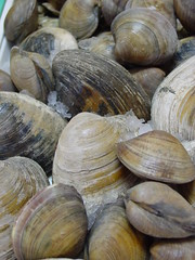 sea snail(0.0), schnecken(0.0), produce(0.0), escargot(0.0), animal(1.0), clam(1.0), shellfish(1.0), seafood(1.0), invertebrate(1.0), food(1.0), cockle(1.0), clams, oysters, mussels and scallops(1.0), mussel(1.0),