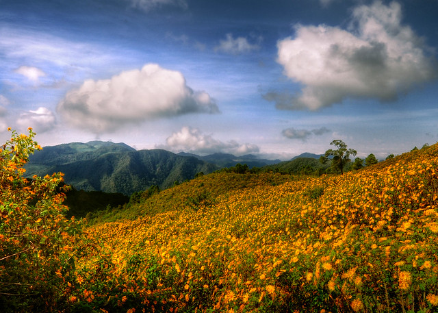 ~ The Yellow Field ~