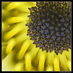 COLOR_flower_015