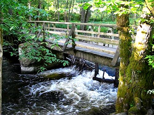 water forest river video naturereserve säveån 20080604