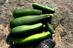flower(0.0), plant(0.0), vegetable(1.0), green(1.0), produce(1.0), food(1.0), cucumber(1.0), cucurbita(1.0), gourd(1.0),