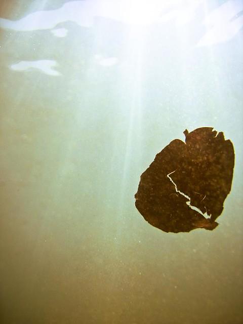 Fall 2 Underwater