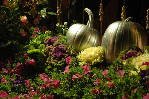 Cinderella's Silver Halloween PUMPKINS in a Bed of Pink Flowers and decorative cabbage, Roses, brass bed frame, Mill Rose Inn, Half Moon Bay, California, USA by Wonderlane