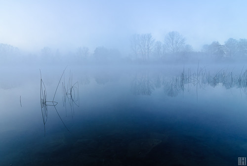 morning blue cold water grass misty austria bluehour bluemood alterrhein lustenau