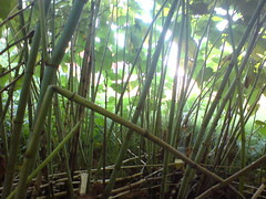branch, bamboo, tree, sunlight, green, forest, natural environment, jungle, plant stem, vegetation,