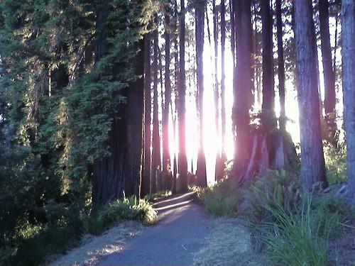 california forest landscape arcata